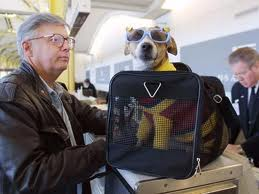 Enjoying Airline Travel With Your Pet