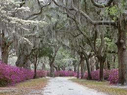 Explore The South On A Fly-Drive Tour