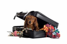 Tips For Adapting Dogs To Airline Travel