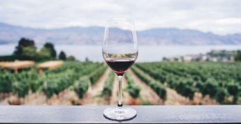 Discover The Top Destinations For Wine Tourism In France