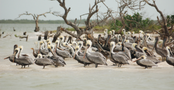 Get Cheap Flights Birdwatching And Check Out These Destinations